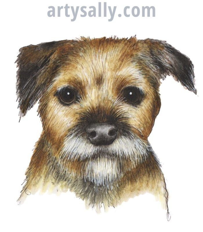 Dog Border Terrier