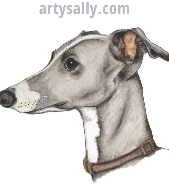Dog Greyhound Dark
